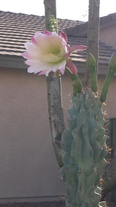 mark house plant