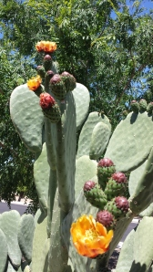 side cactus flower
