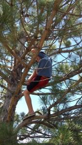 alastair-in-tree