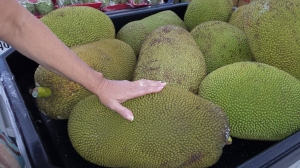 Jackfruit. Never heard of it. They are huge, as you can see from Bec's normal-sized hand.