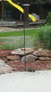 bird feeder squirrel