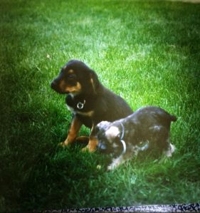 Bill's dog Bear and Court and my dog Fritz, when they were puppies, circa 1991. They died of old age. We didn't eat them.