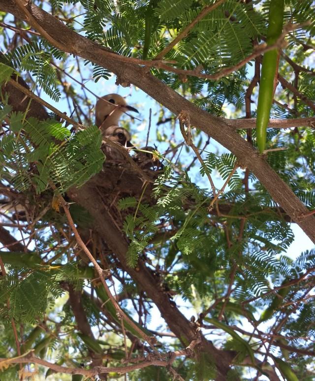 mother baby bird (2)