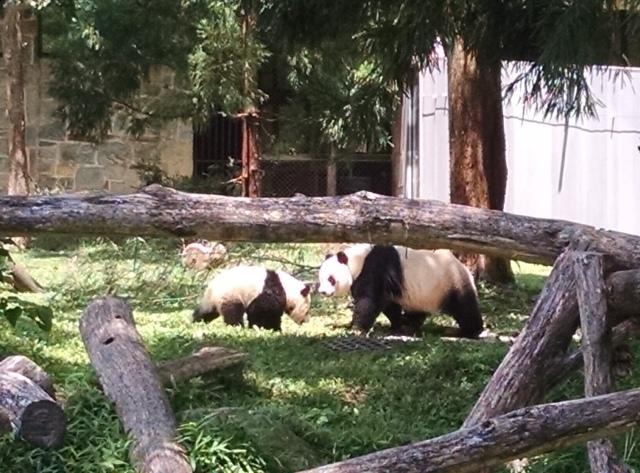 DC pandas