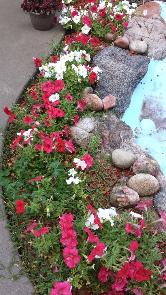 petunias red white