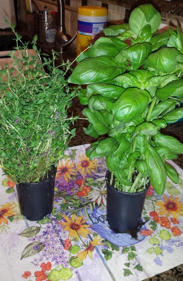 herb-plants